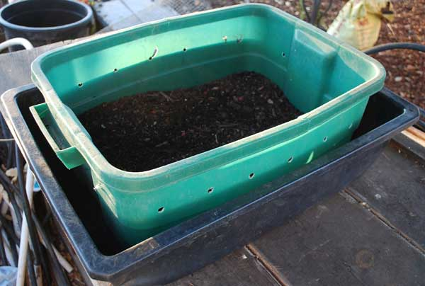 Worm Bin Composting of Food Waste
