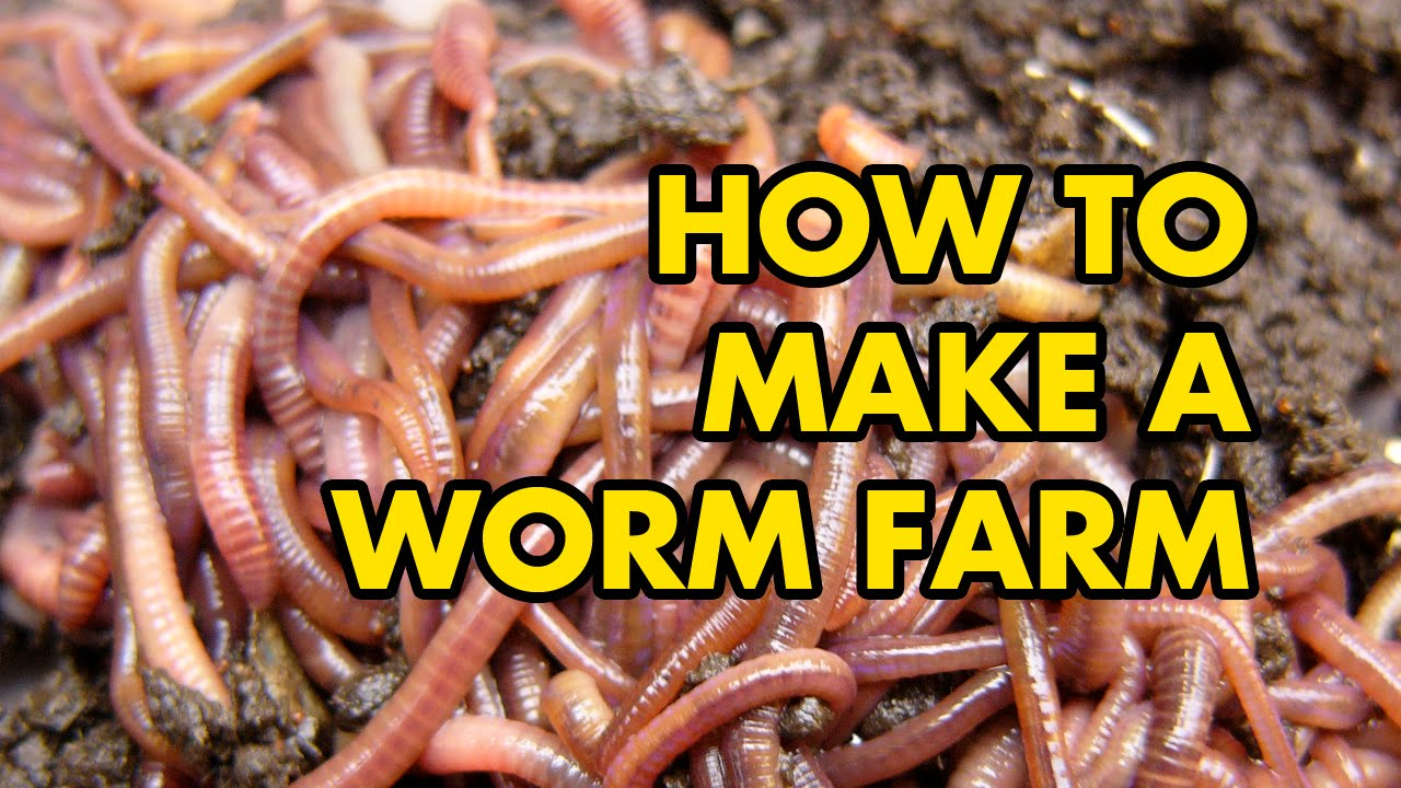 Learn How To Worm Farm Right